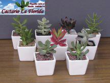 Regalos d a de la madre en santiago cactus y suculentas for Cactario santiago